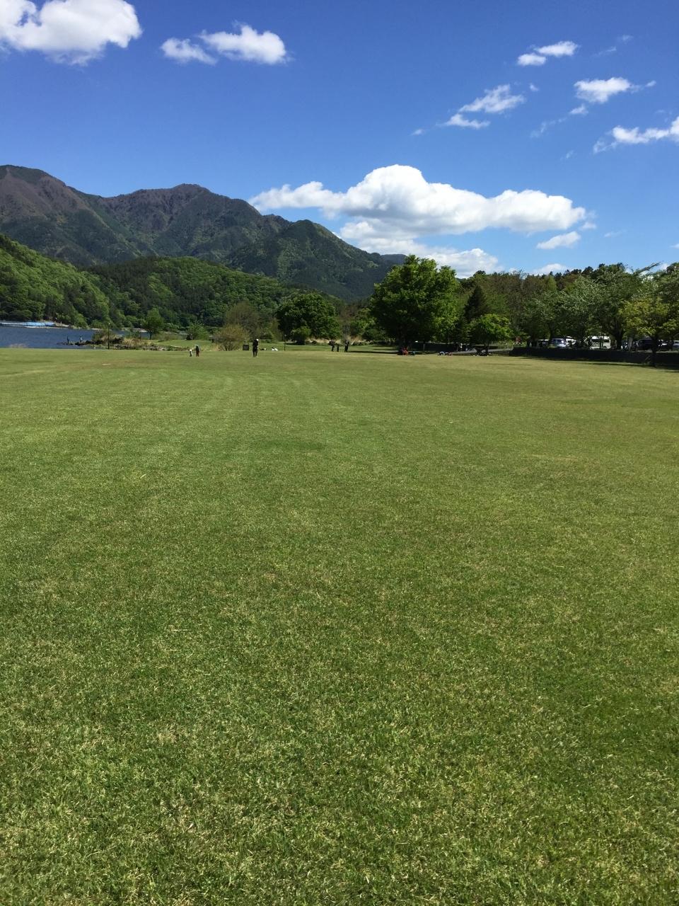 綺麗な芝生が広がっています