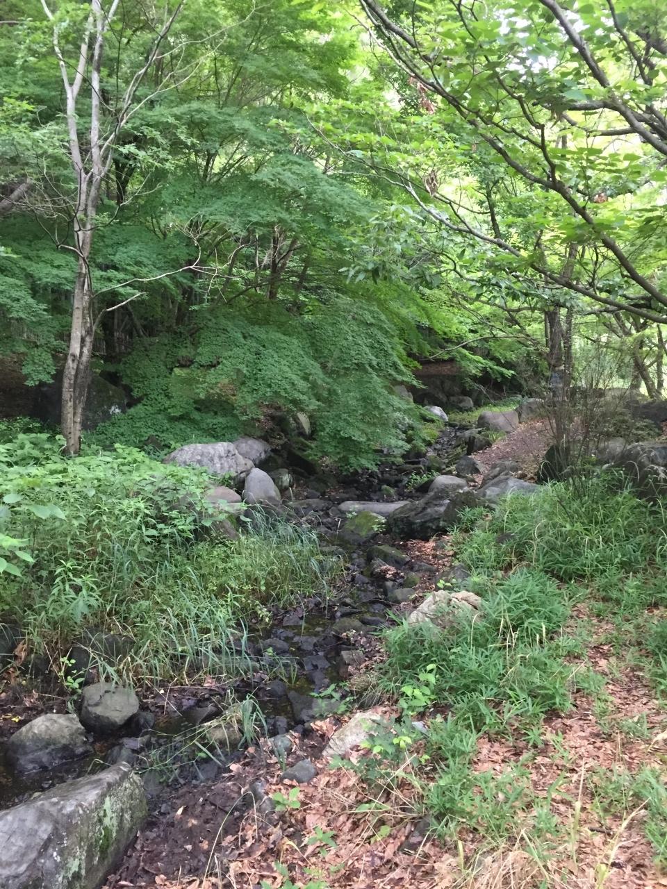 水遊びできる小川もありました。
