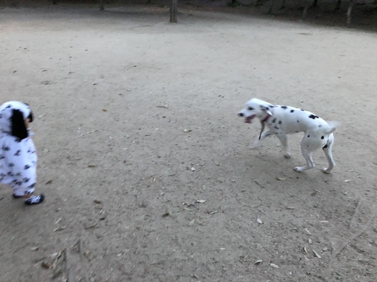 大型犬も走りまわれます!
