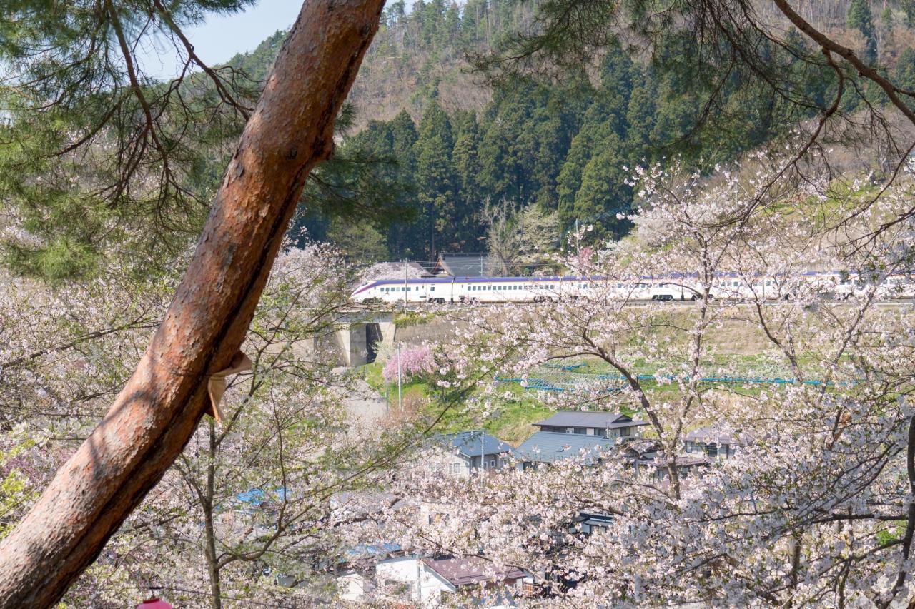 サクラと新幹線