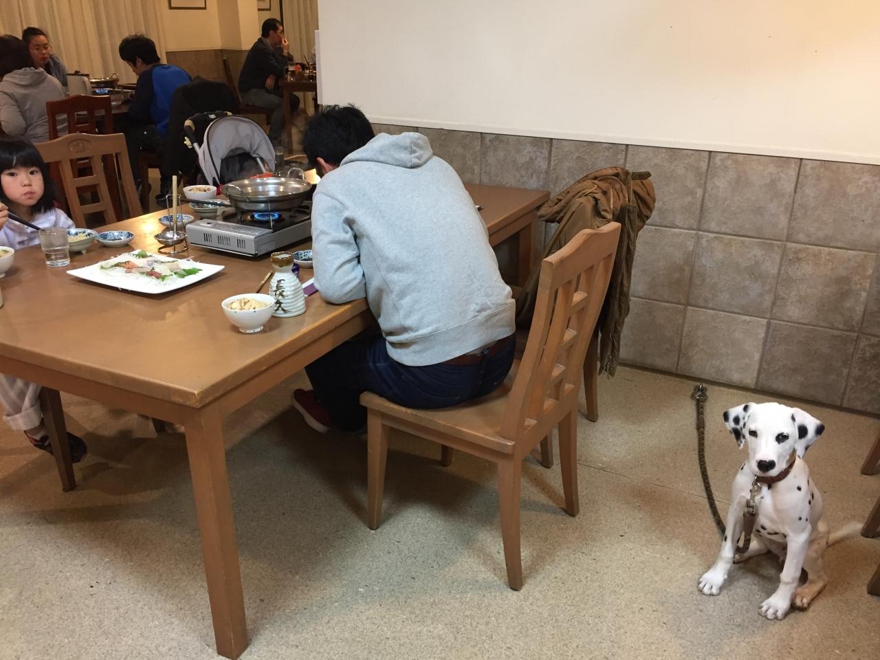 愛犬とご飯も一緒に食べれます!