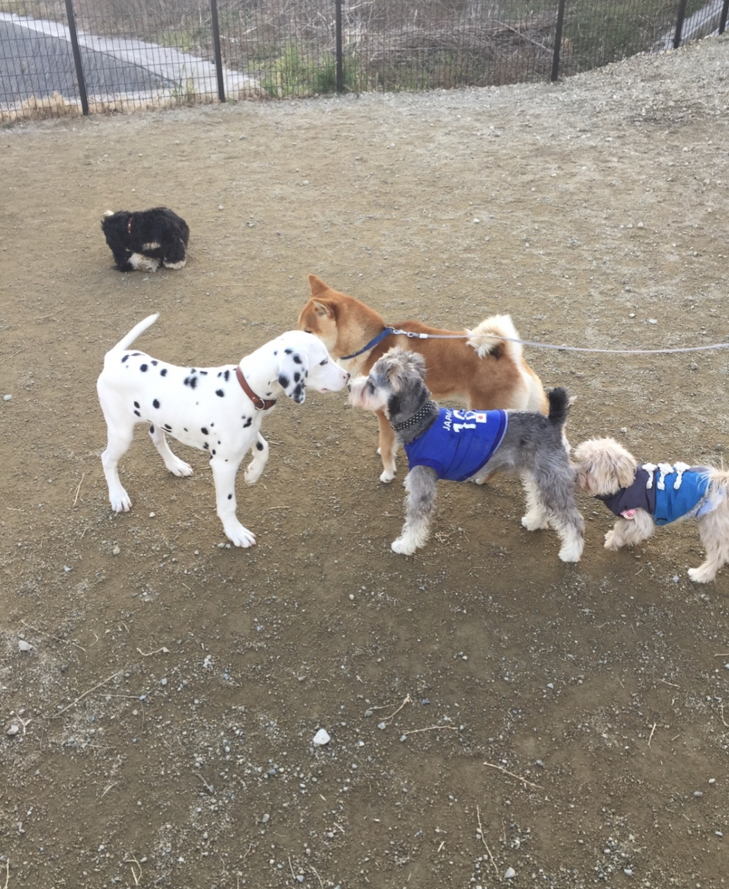 大型犬と小型犬と2か所わかれています