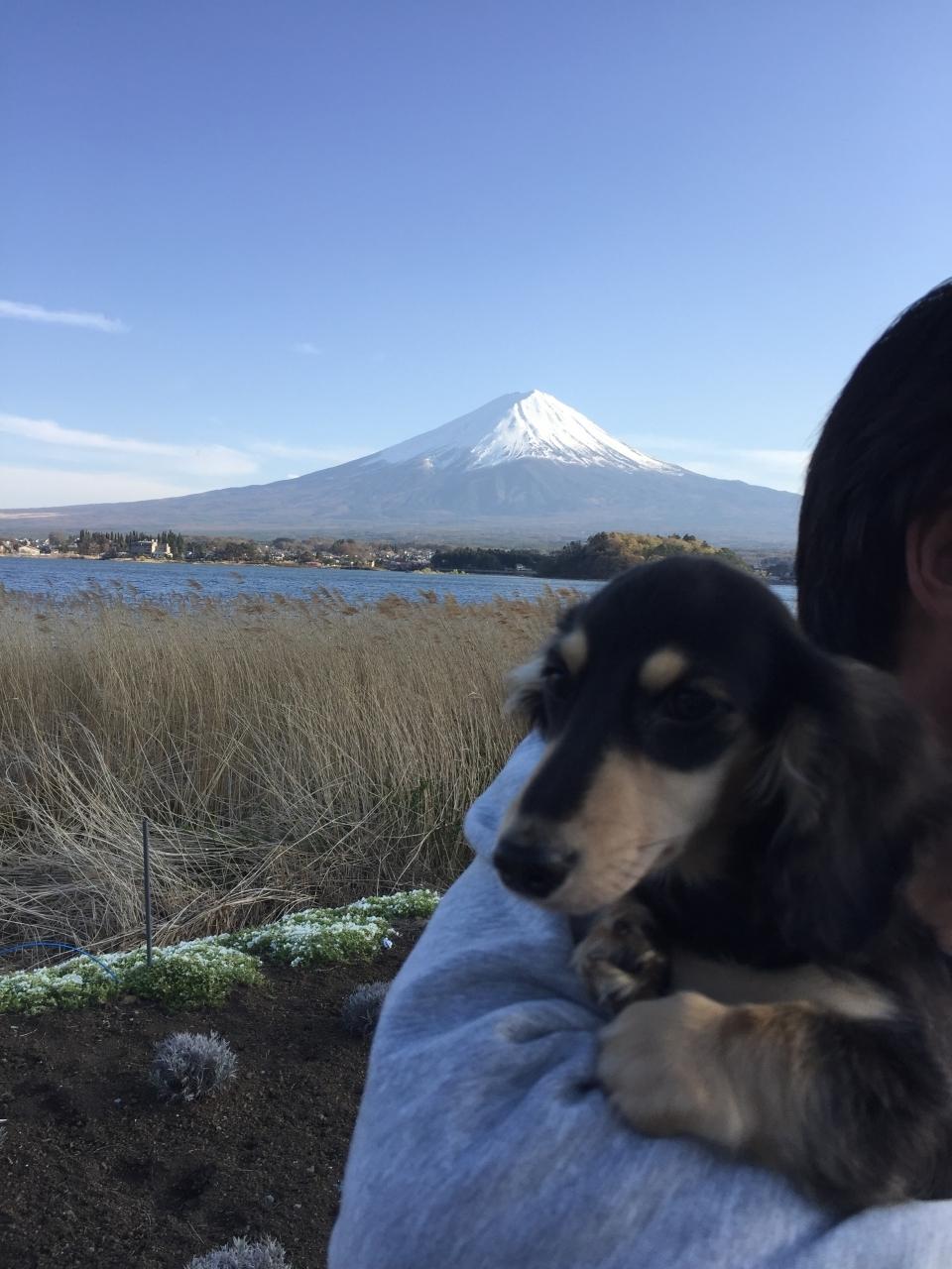 富士山とぼく