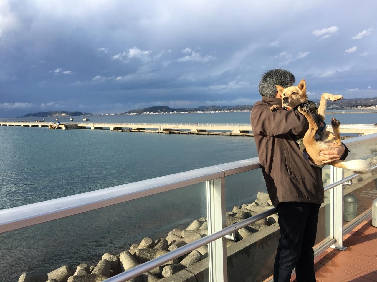 海の駅 だいぼ:千葉県館山市(レジャー施設)|てくてく