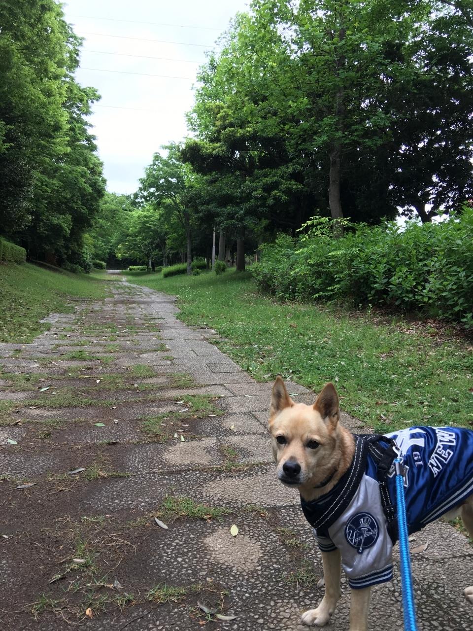 北部公園散歩道