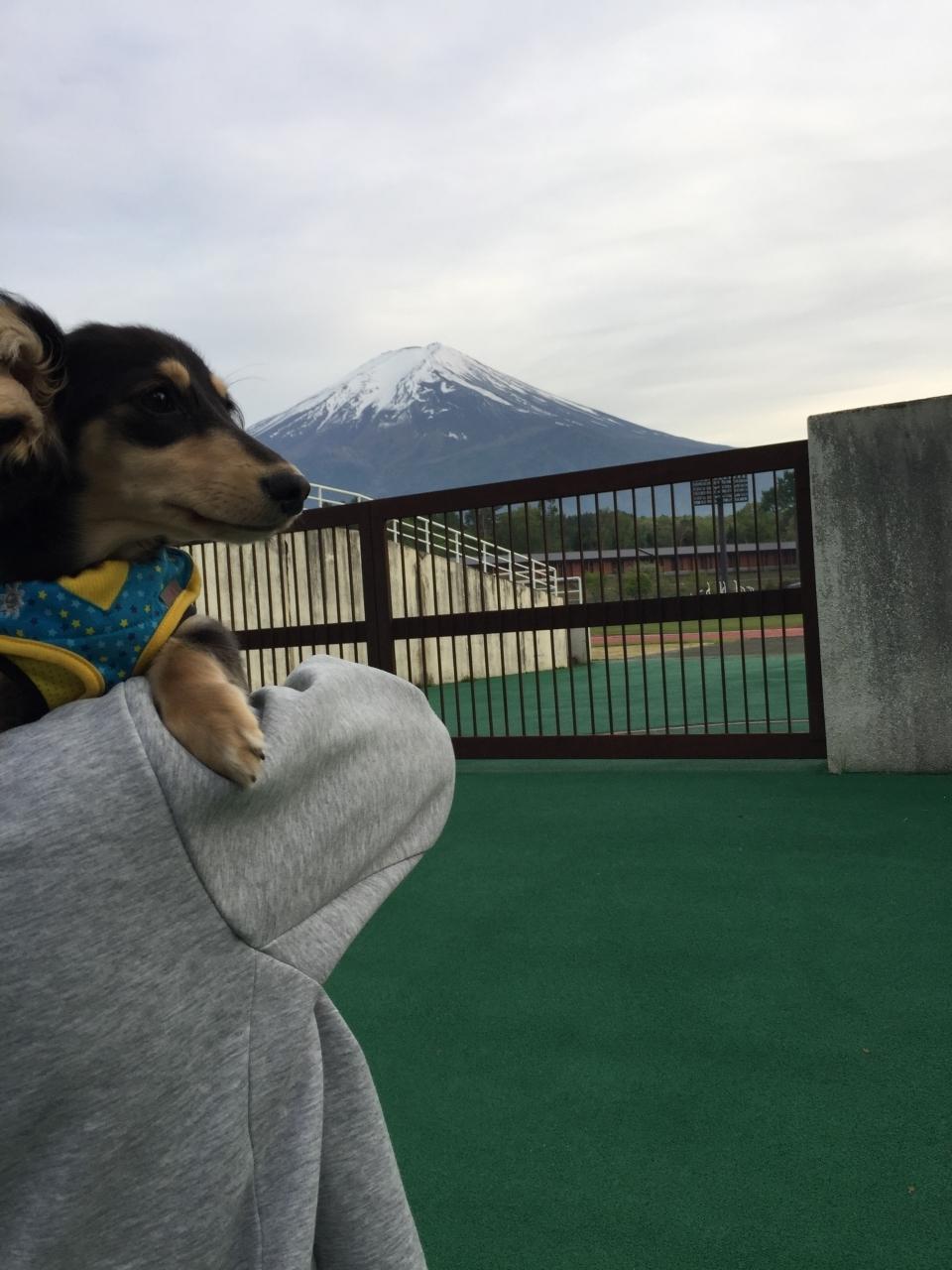 お散歩途中富士山みました