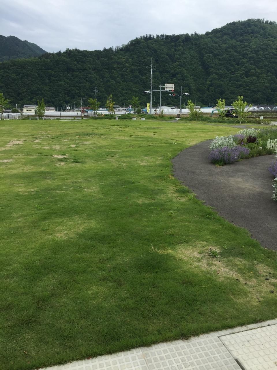 綺麗な芝生が広がってます