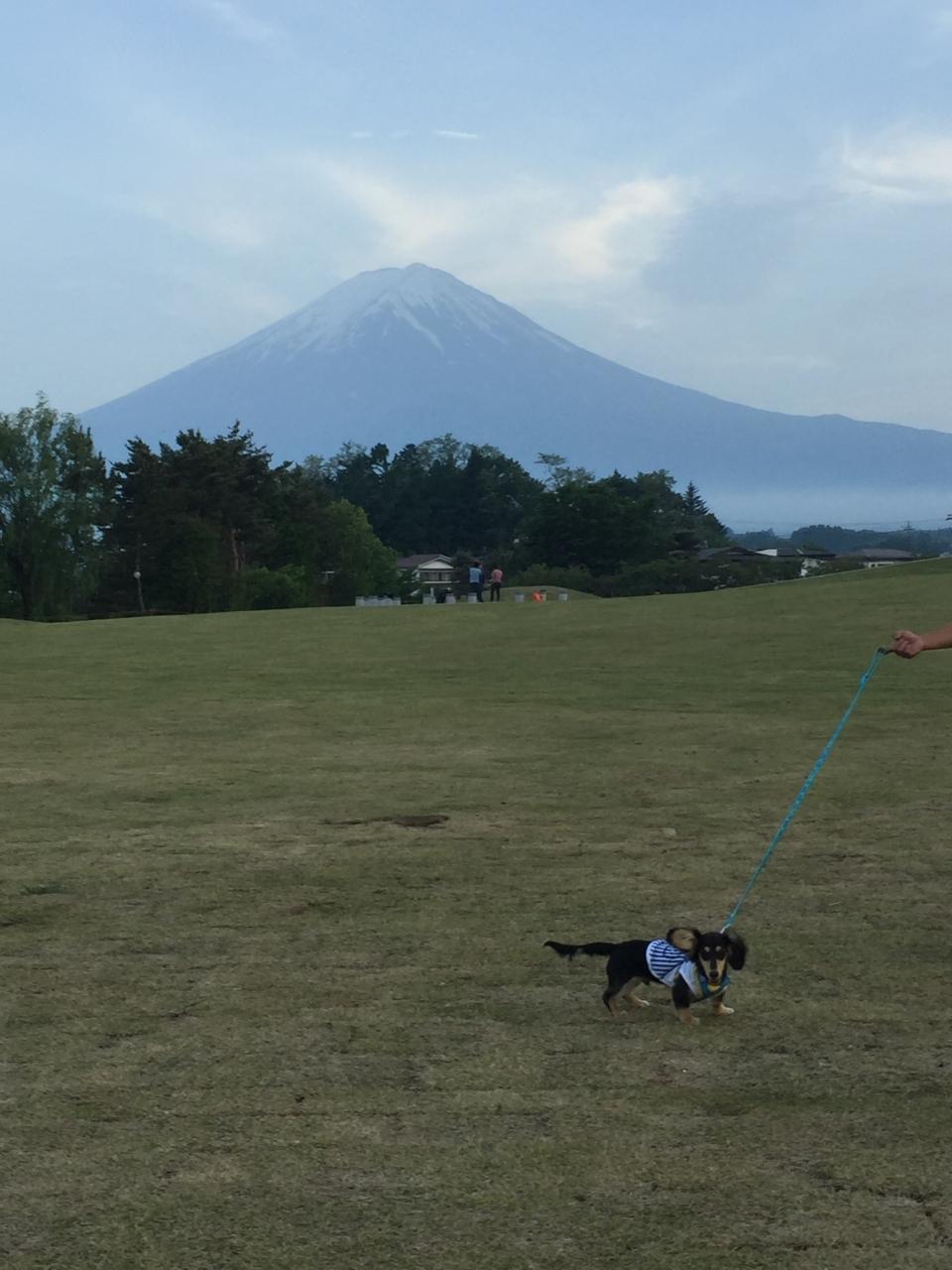 富士山もこんな近くにみえます