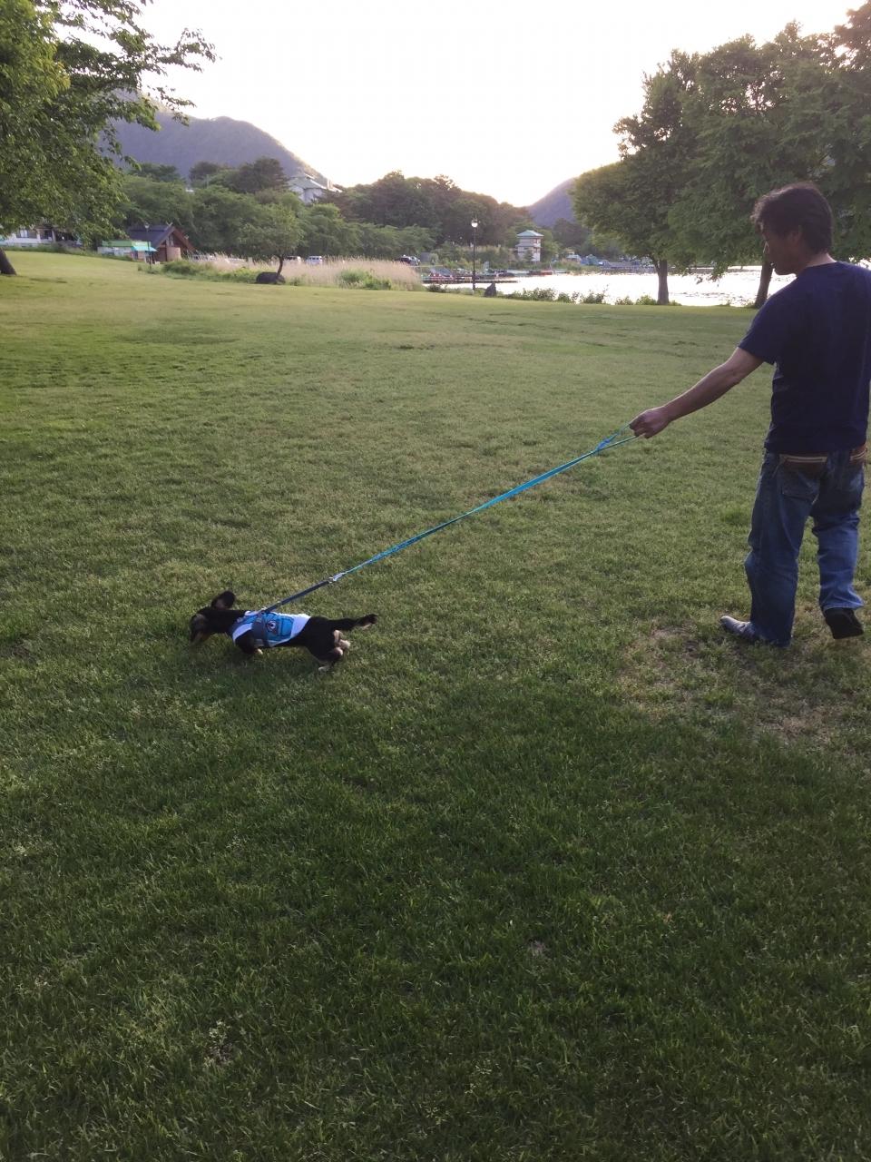 芝生広場でのびのびおさんぽ