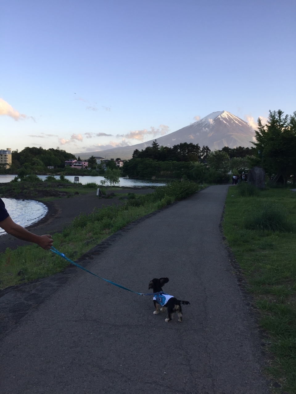 富士山を目の前にしてお散歩