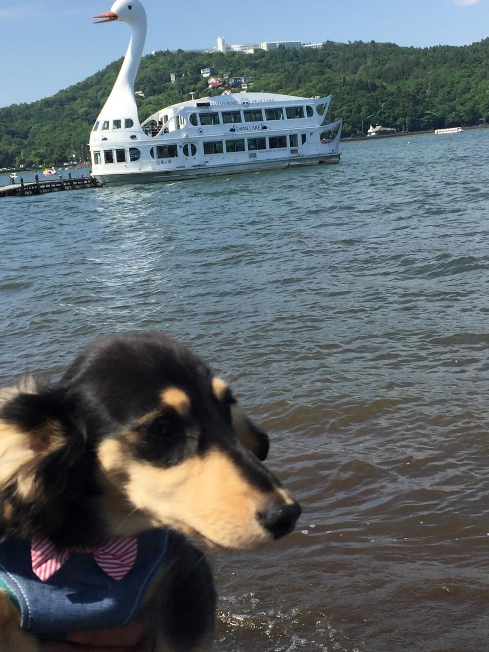 山中湖を眺めながらのお散歩
