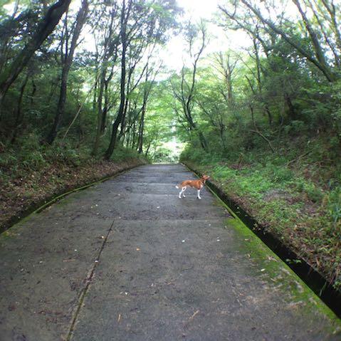 雑木の階段道🍀
