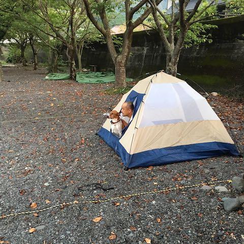 キャンプ場もあるよ⛺️🔥