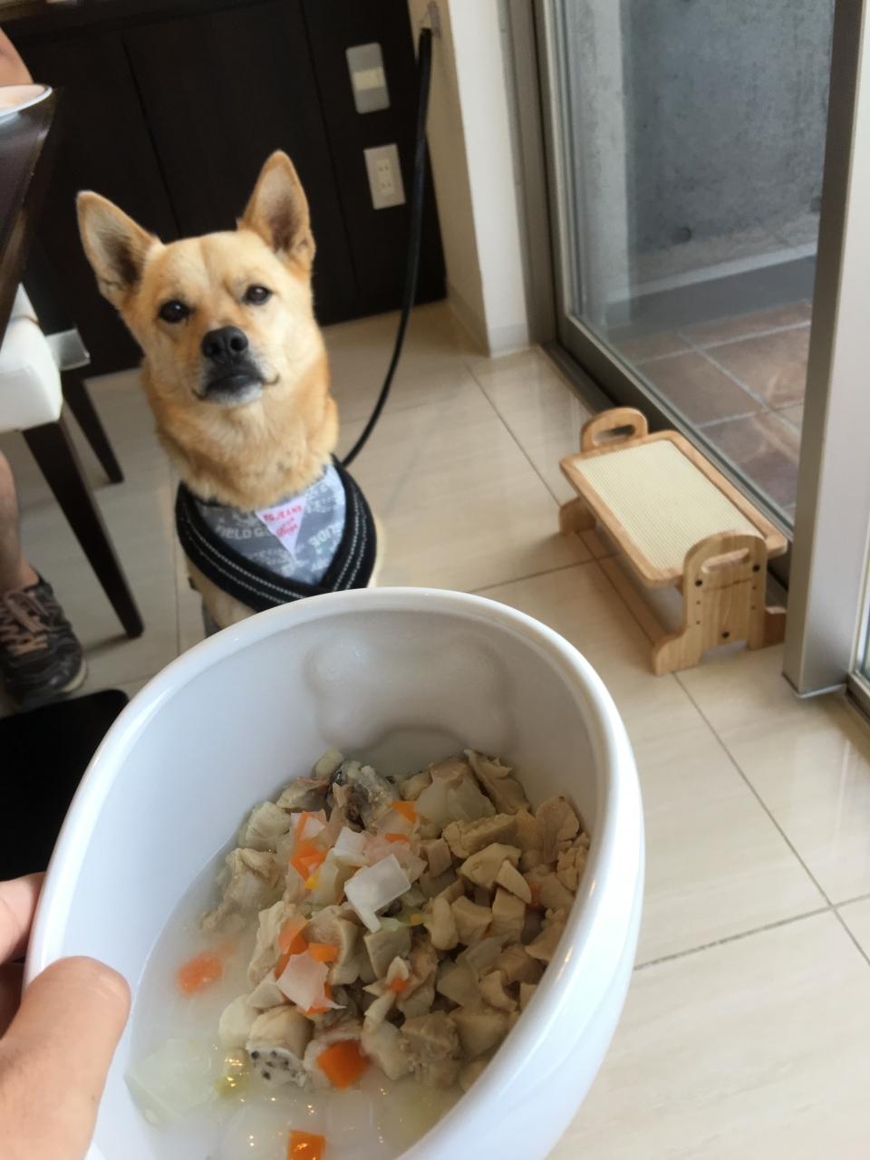 ペットの食事はビュッフェ!
